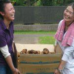 ジャガイモ掘り 収穫